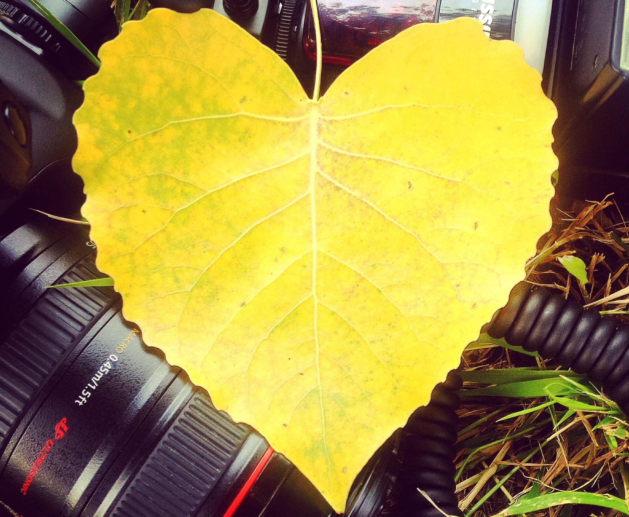 close up of leaf shaped like instagram like